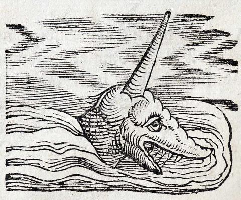 Gesner Narwhal Sea Unicorn